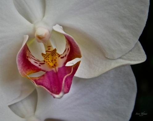 A FLOWER RYAN