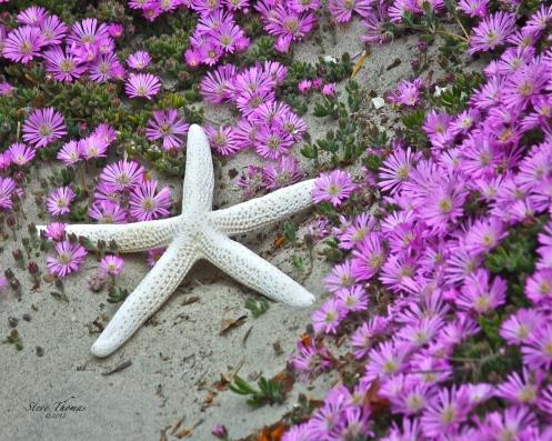 A PURPLE STAR_2