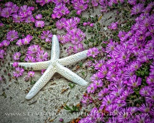 STAR IN PURPLE