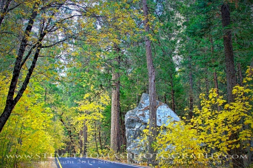 YELLOWSTONE NATIONAL PARK - INTO THE FALL 1 WEB_edited-1